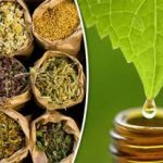 List of Ayurvedic Companies in Chennai